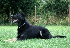Dog Training Case Study On An Aggression Issues The Dog Seemed To