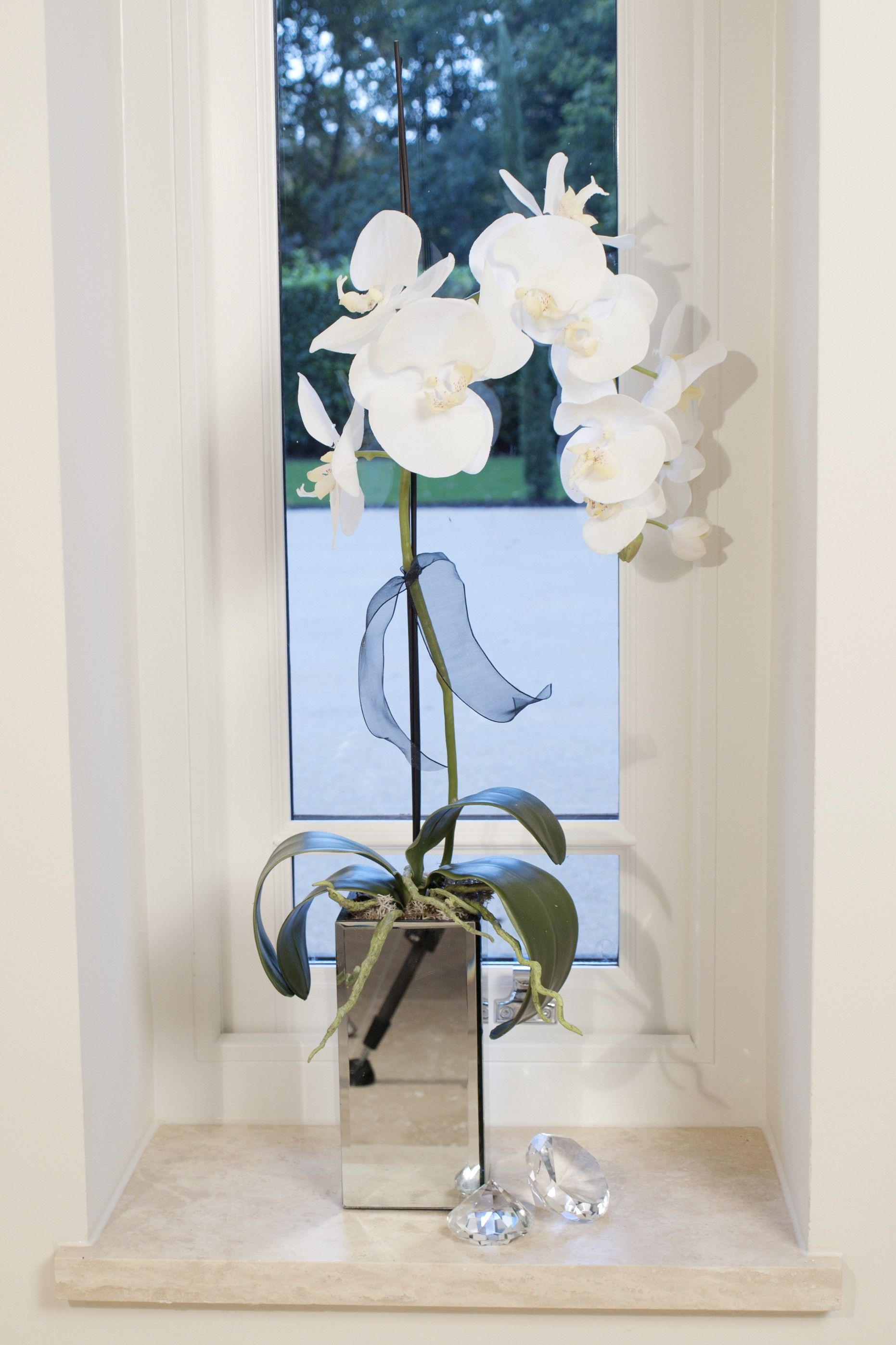 Orchid in a tall mirrored cube flowers pinterest orchids
