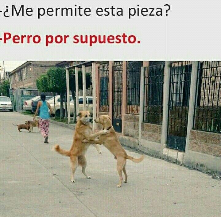 Pin De Rominna Cichero En Tender Cute Perro Bailando Perros Chistosos Memes Divertidos