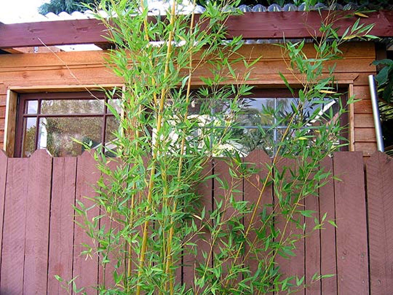 Small Garden Idea: Use Bamboo For Privacy | Small gardens ...