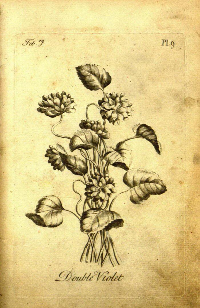 Как выглядит первая раскраска для взрослых 1760 года выпуска