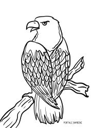 Disegni Di Aquile Da Stampare E Colorare Gratis Portale Bambini Eagles Coloring Coloringpages Colorinspiration Birds Aquila Disegni Colori