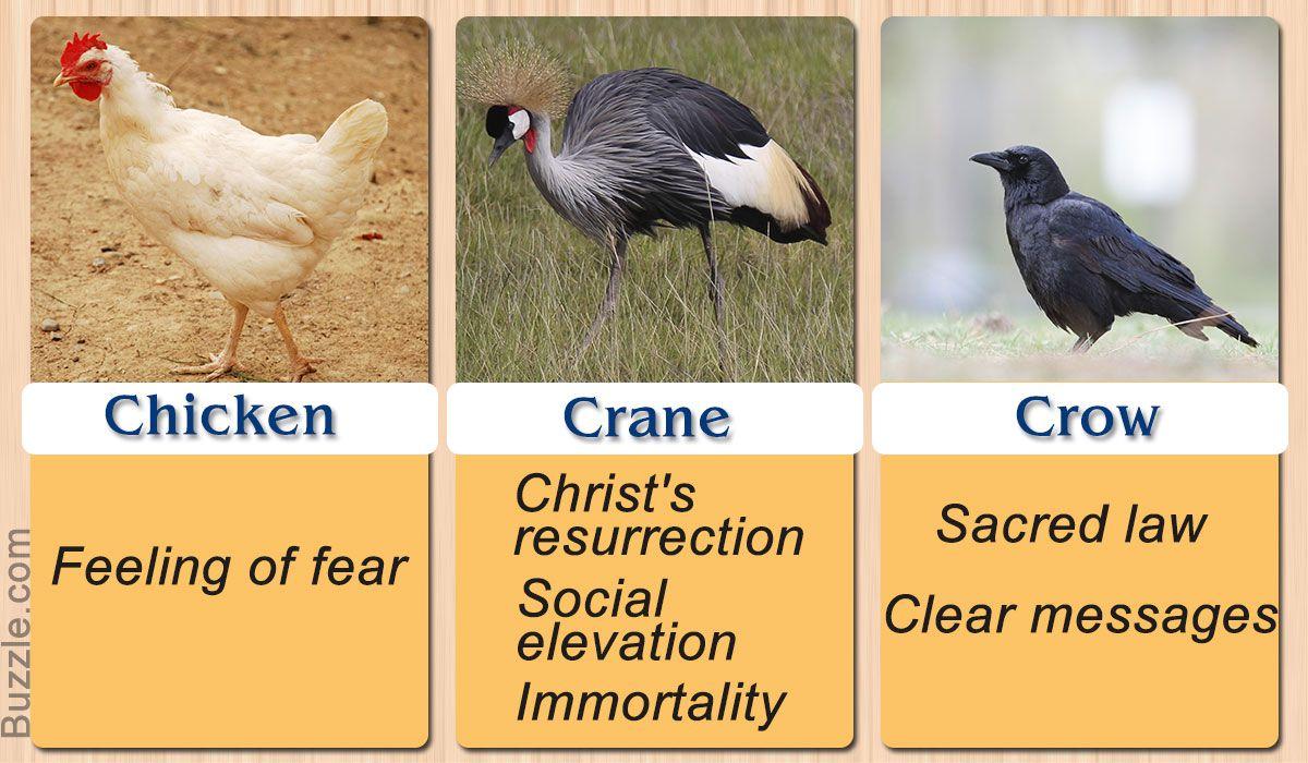 Chicken Crane Crow Symbols Pinterest Birds Symbols And