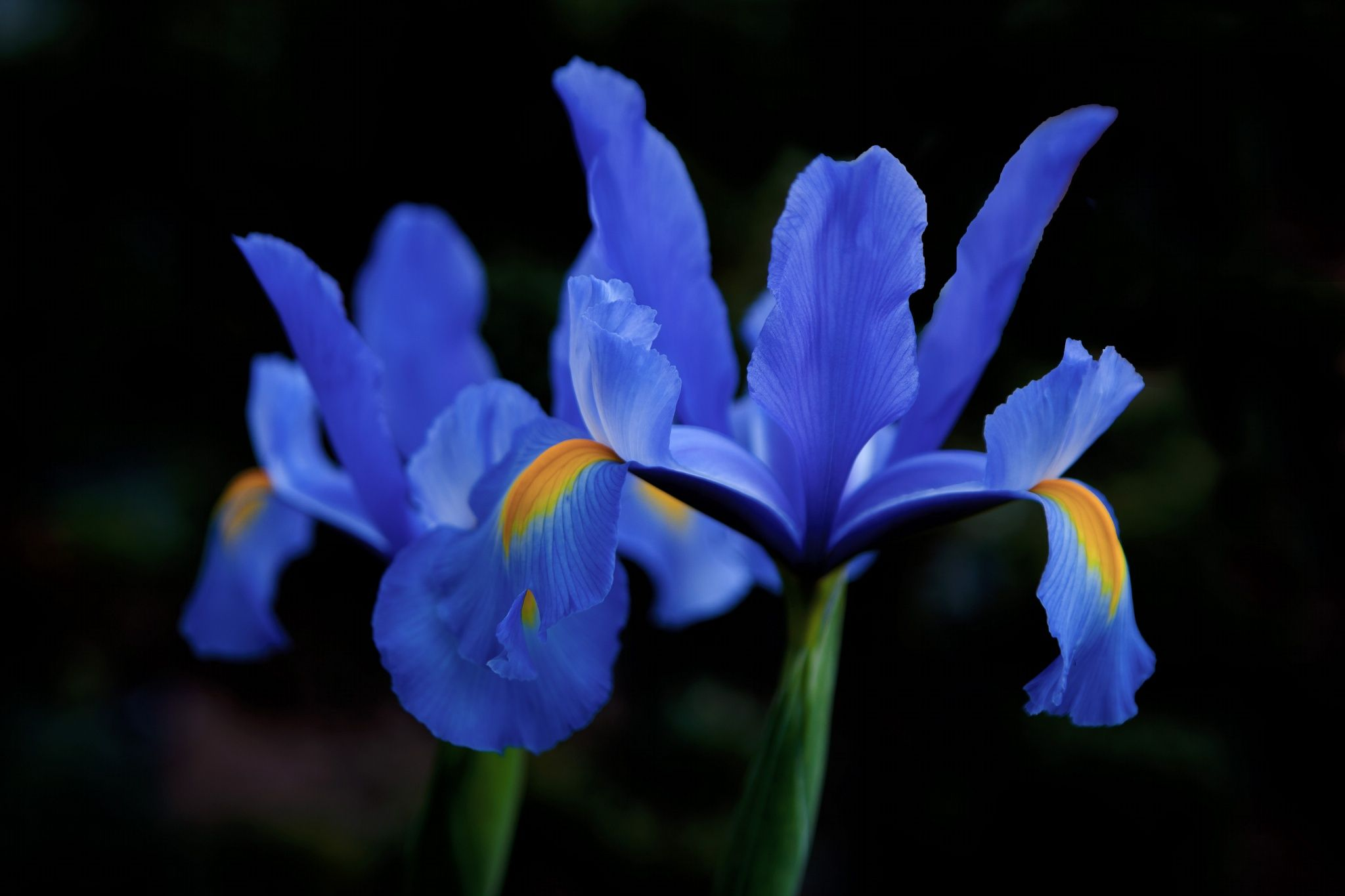 Iridaceae by Richard Kam on 500px, 96.5 so far, CameraCanon EOS-1Ds Mark III Focal Length52mm Shutter Speed1/80 s Aperturef/3.5 ISO/Film200 CategoryNature UploadedAbout 6 hours ago TakenSep 17, 2014
