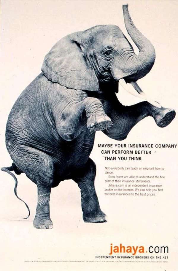 Jahaya Com Elephant On Hind Legs Print Ad By Annonsbyra 3