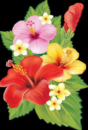 Resultado de imagen de gifs animados flores hawaianas