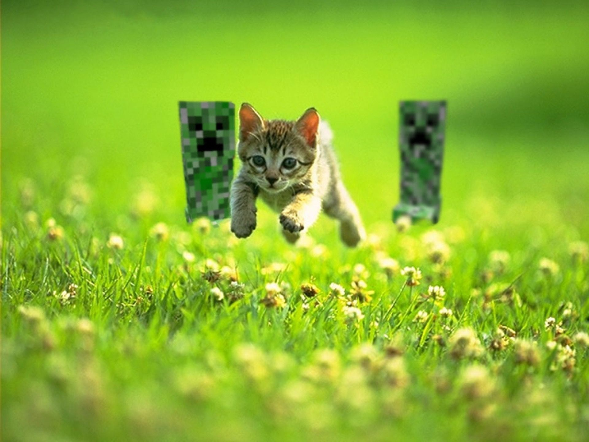 Pin By Marley Cochran On Minecraft Cute Animals Kittens Kittens Cutest