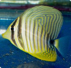 Pin On Aquarium Cool Fish
