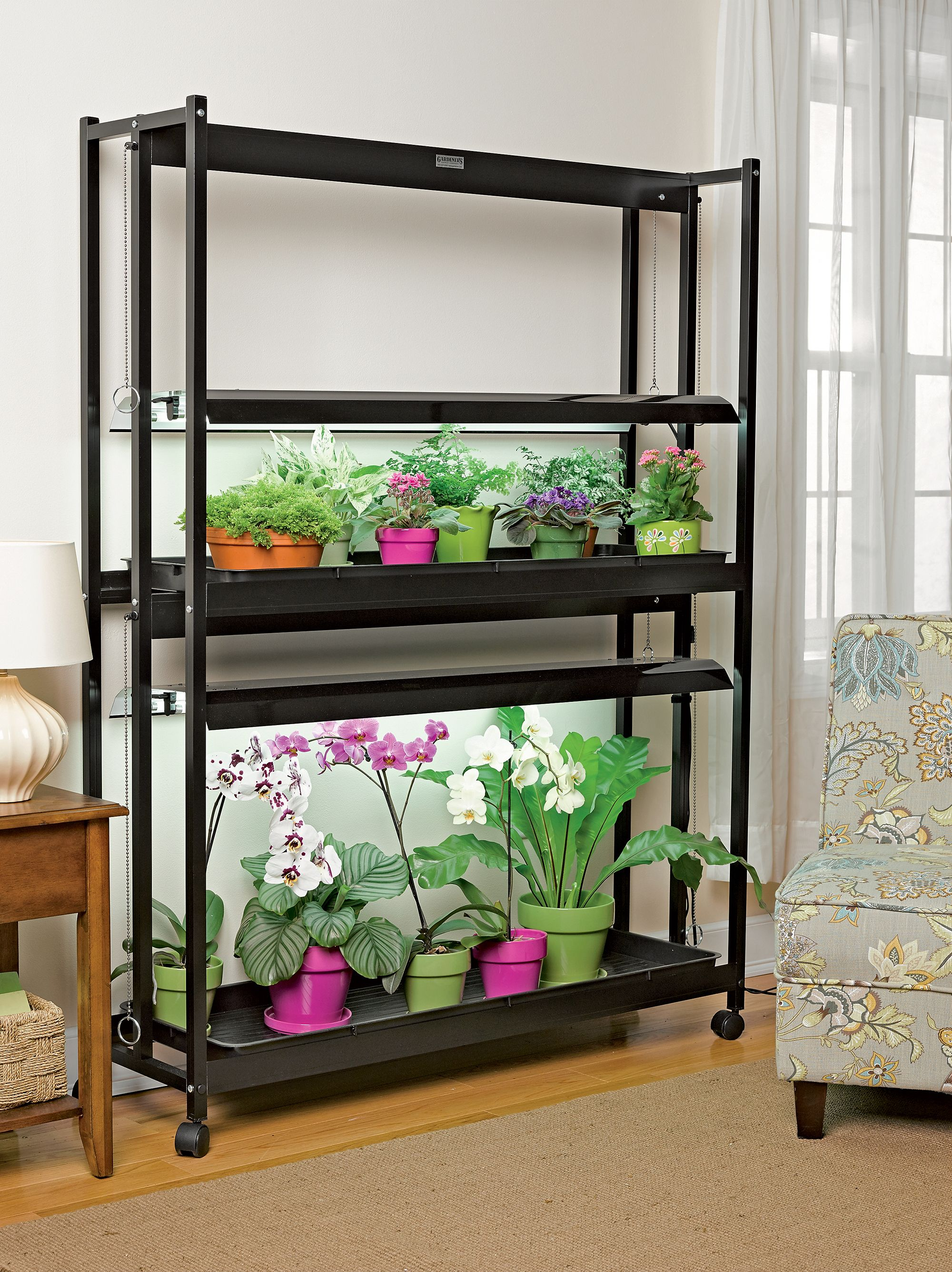 Growing Orchids Indoors High Intensity