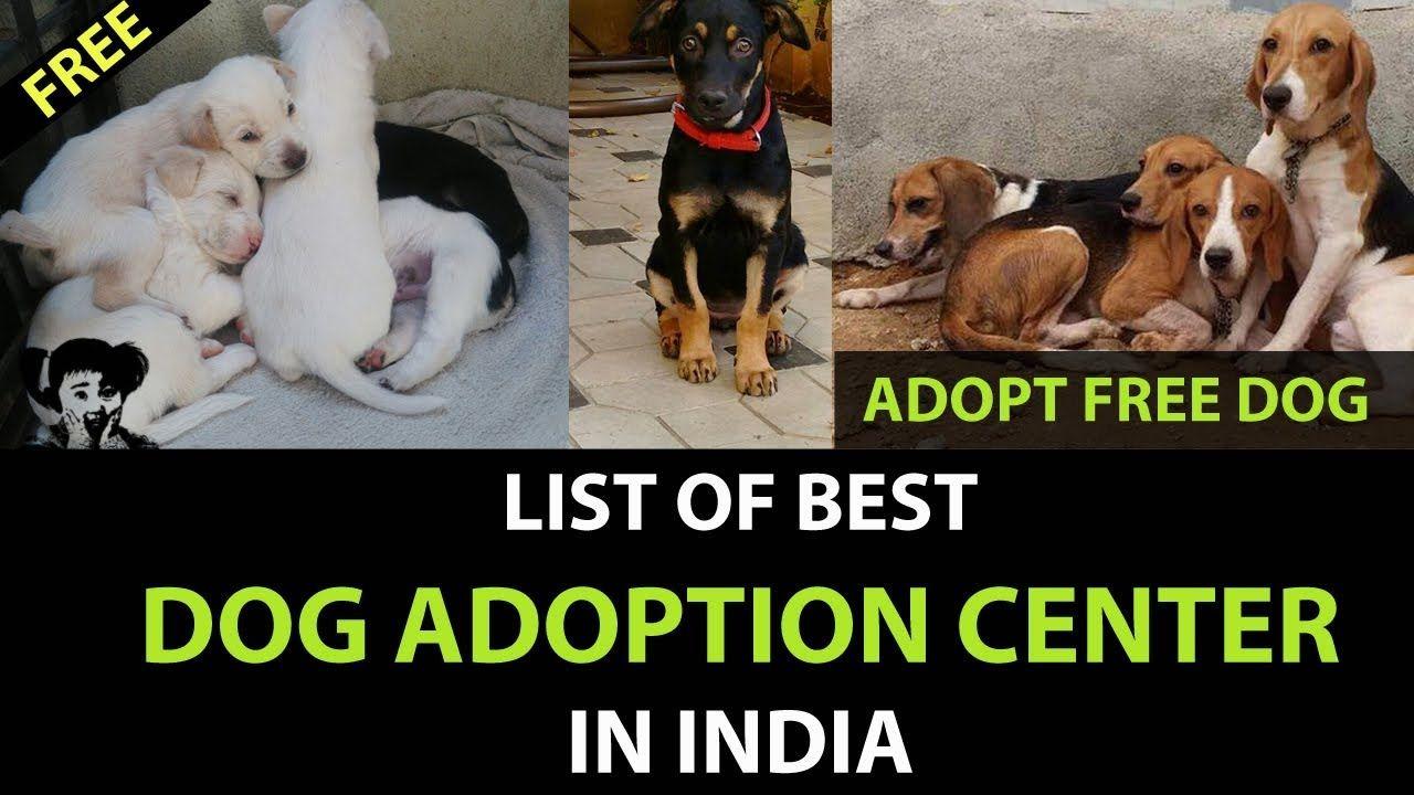 Free Dog Adoption Center L Dog Adoption Center In Mumbai L Dog Adoption Center In Delhi Kolkata Dog Adoption Free Dogs Dogs