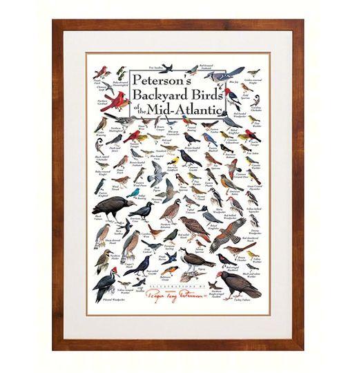 Petersons Backyard Birds of the Mid-Atlantic Coast Wall ...