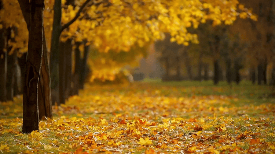 Fall Winds Cinemagraph The Hottest Fall Background Nature Gif Autumn Season Nature