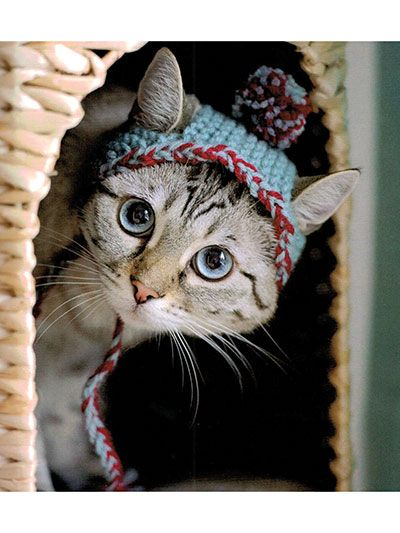 New Crochet Patterns - Cats in Hats