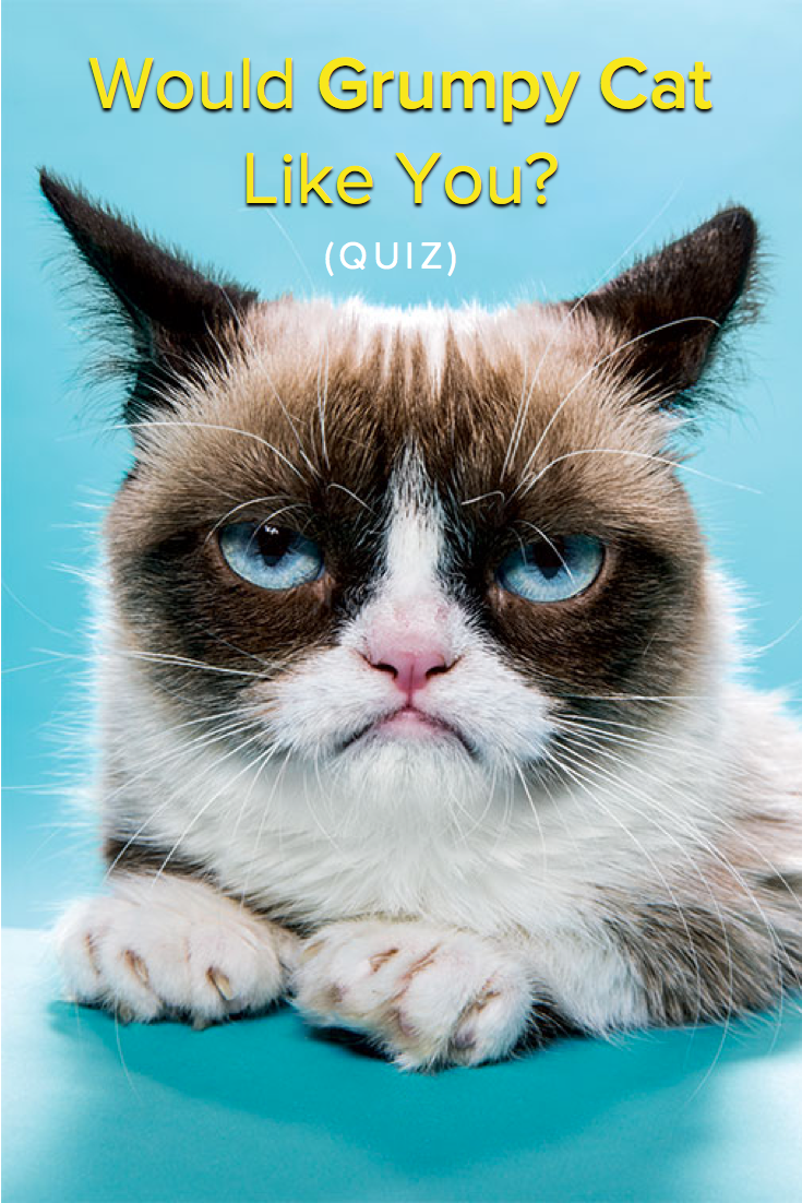 Would Grumpy Cat Like You Do You Think You Re A Cat Whisperer Think You Have A Way With The Kitties Funny Grumpy Cat Memes Grumpy Cat Humor Grumpy Cat Meme