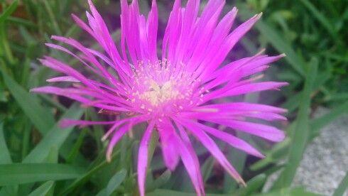 Macro_Flower
