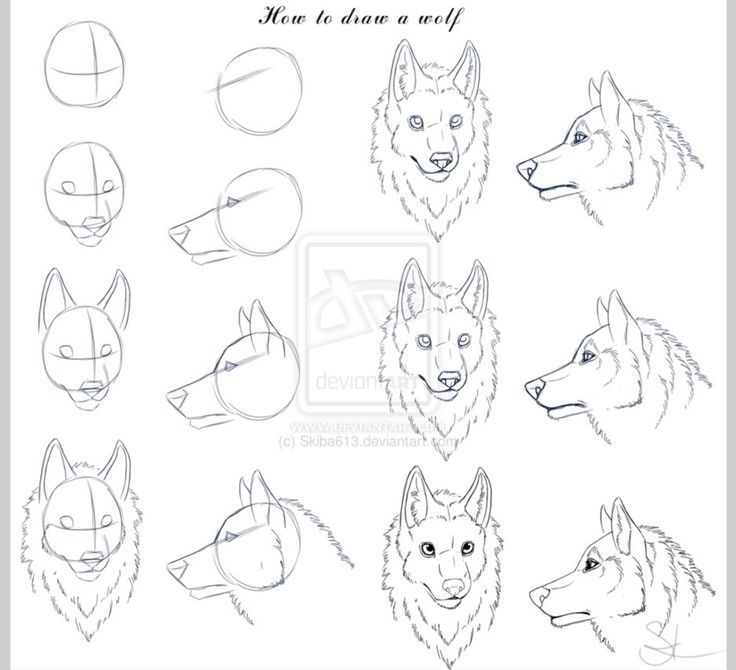 Bildresultat For How To Draw A Wolf Face Draw Pinterest Wolf