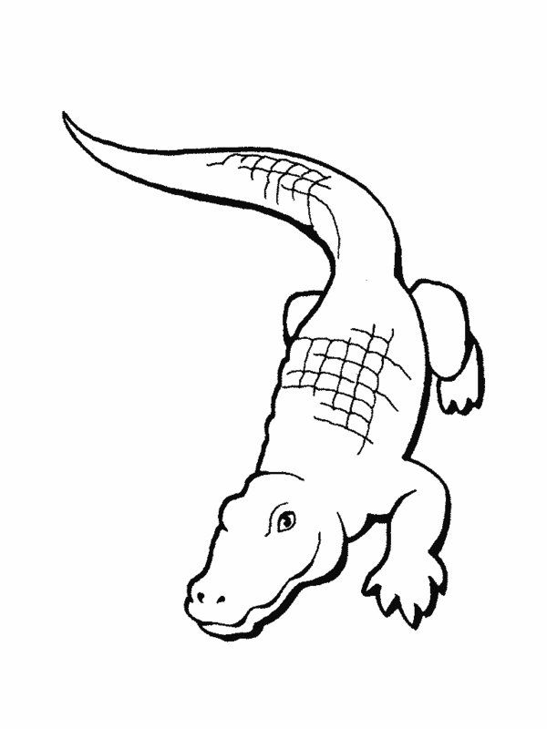 simple jungle animal coloring pages - photo#27