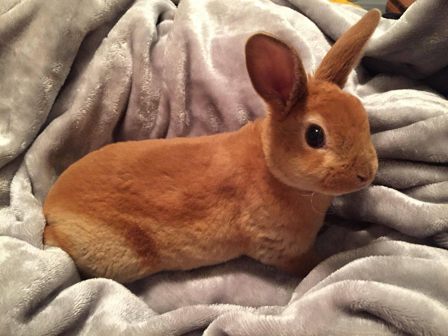 Pin By Winn Adams On Bunnies Cute Baby Animals Cute Animals Cute Baby Bunnies
