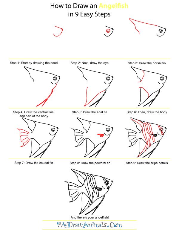 Angel fish drawings - photo#51