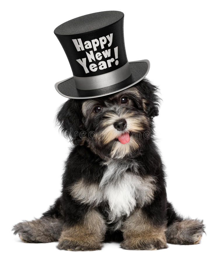 Cute Havanese Puppy Dog Is Wearing A Happy New Year Top Hat A Happy Smiling Hav Sponsored Wearing In 2020 Havanese Puppies Happy New Year Dog Dogs And Puppies