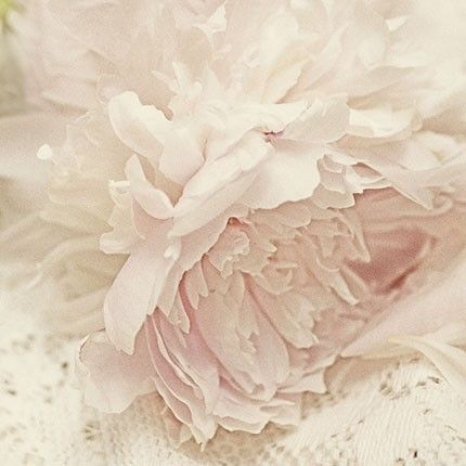 Peony Photograph Floral Art Print Shabby Chic Wall Decor French Country Pink