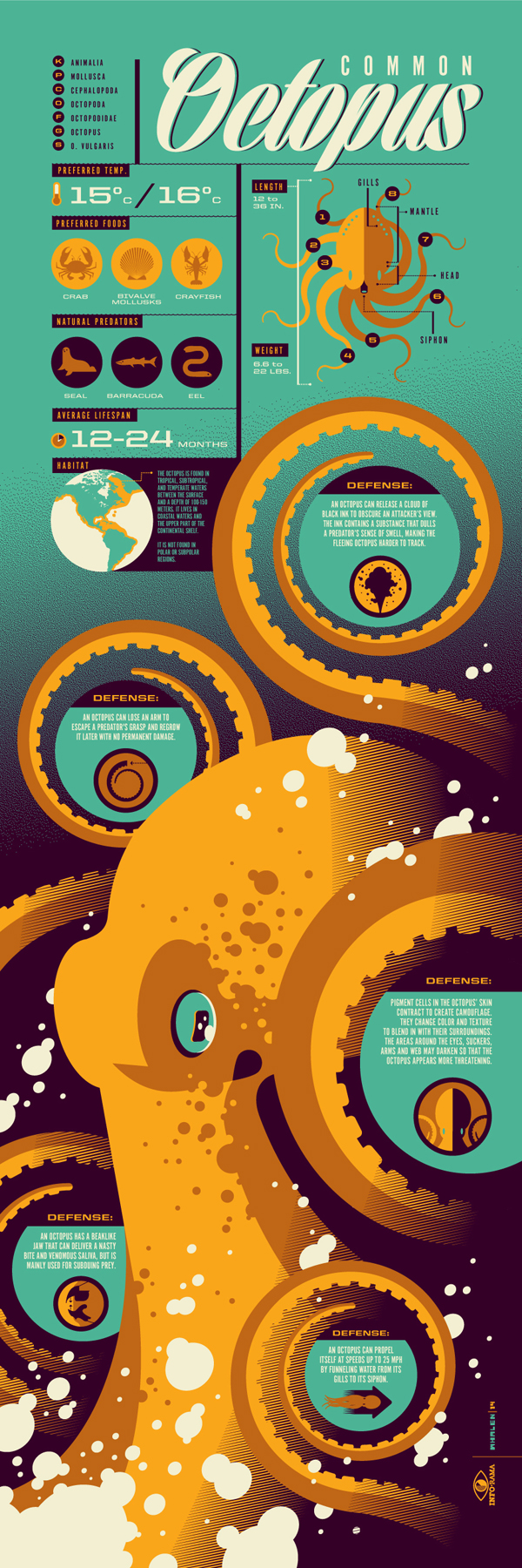 I think this is a good infographic example because it separates the information nicely. Every piece of information has a place to highlight its importance. I like how it uses the body of the octopus to separate the different defenses octopi have.