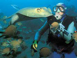 El fondo marino de Tenerife es uno de los preferidos por los buzos profesionales. Esconde todo un mundo de incalculable belleza en el que habita la fauna submarina de la isla. Déjese sorprender por los meros gigantes, las afiladas bicudas o los amenazantes bogavantes en un viaje único al fondo del mar de Tenerife. El litoral de la isla esconde bellos arrecifes, barcos hundidos y bahías de tortugas ¿Está preparado para descubrirlos?