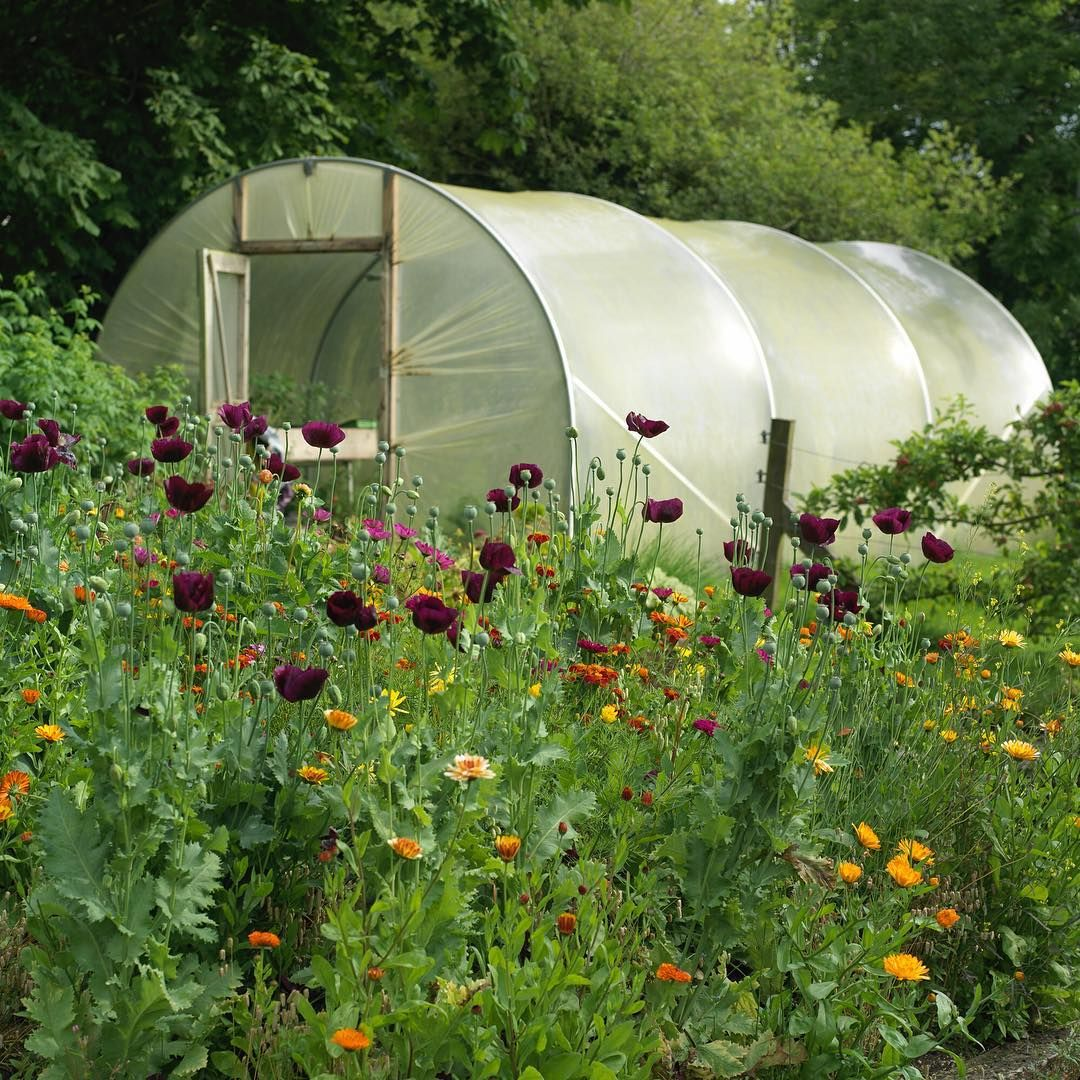 A Classic Case Of Polytunnel Love My Column In Today S Irish