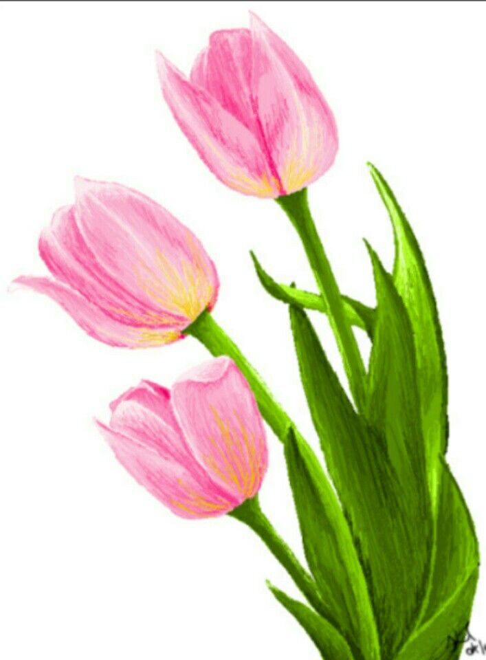 Рисовать тюльпаны картинки