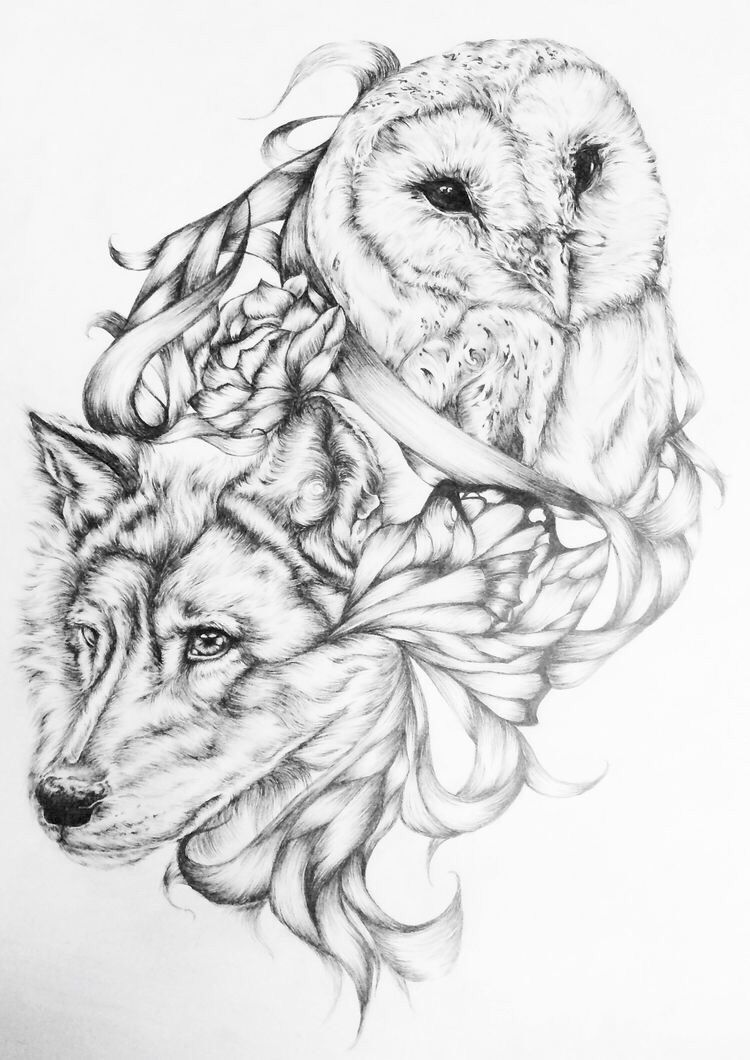 Owl and Wolf drawing
