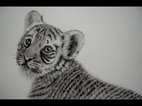 COMO DIBUJAR UN TIGRE BEB  SOMBREAR PELO DE ANIMAL  YouTube