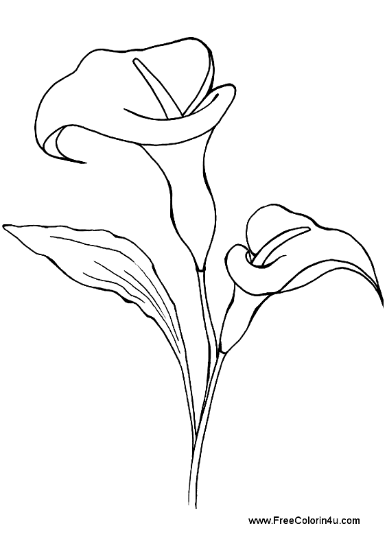 Calla Lily Free Printable Coloring Book Page Calla Lily Picture Print As Portrait In 2020 Lilies Drawing Flower Line Drawings Flower Drawing
