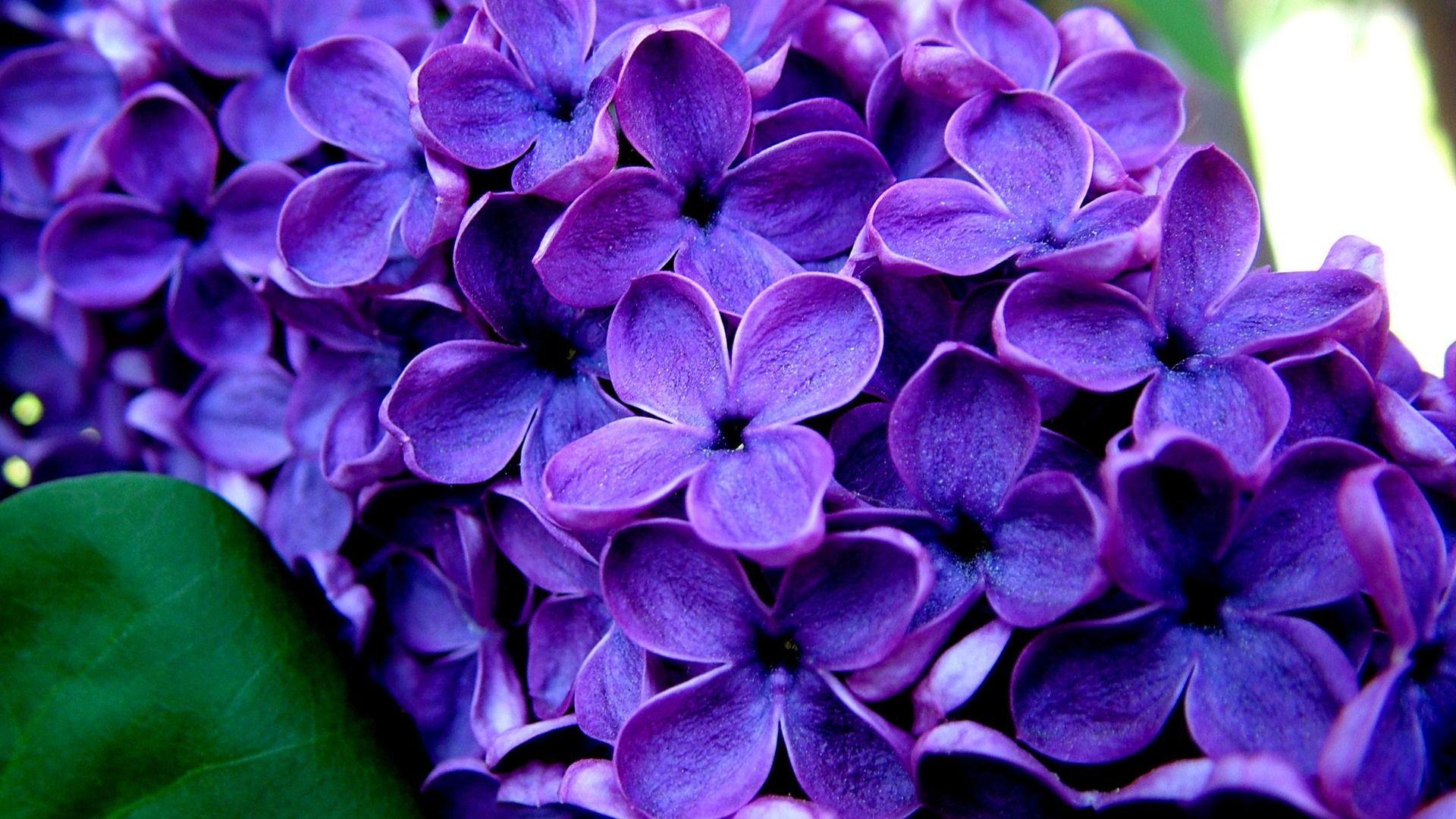 Purple Flowers Desktop Wallpaper Flower ImagesNew Wallpapers