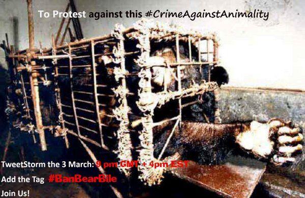 Ban Bear Bile Farms