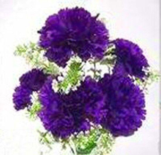 60 carnations dark purple silk wedding flowers bouquets 60 carnations dark purple silk wedding flowers bouquets centerpieces bridal wedding flowersbouquets mightylinksfo