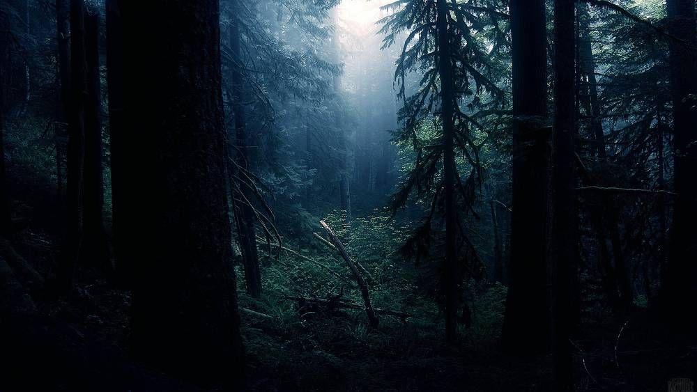 magnifiques forets mystérieuses | Vieille forêt sombre.