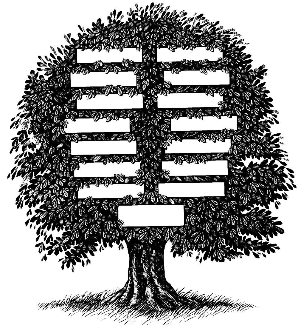 17 Best images about //Arbol genealogicos// on Pinterest | Family ...