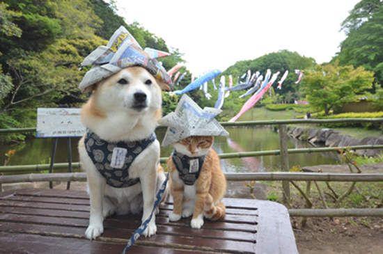 柴犬與花貓 這麼噴鼻血的組合太犯規了 可愛い犬 可愛い 動物 柴犬