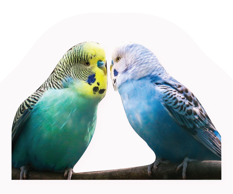 Pin On Beecroft Birds Exotics Veterinary Clinic