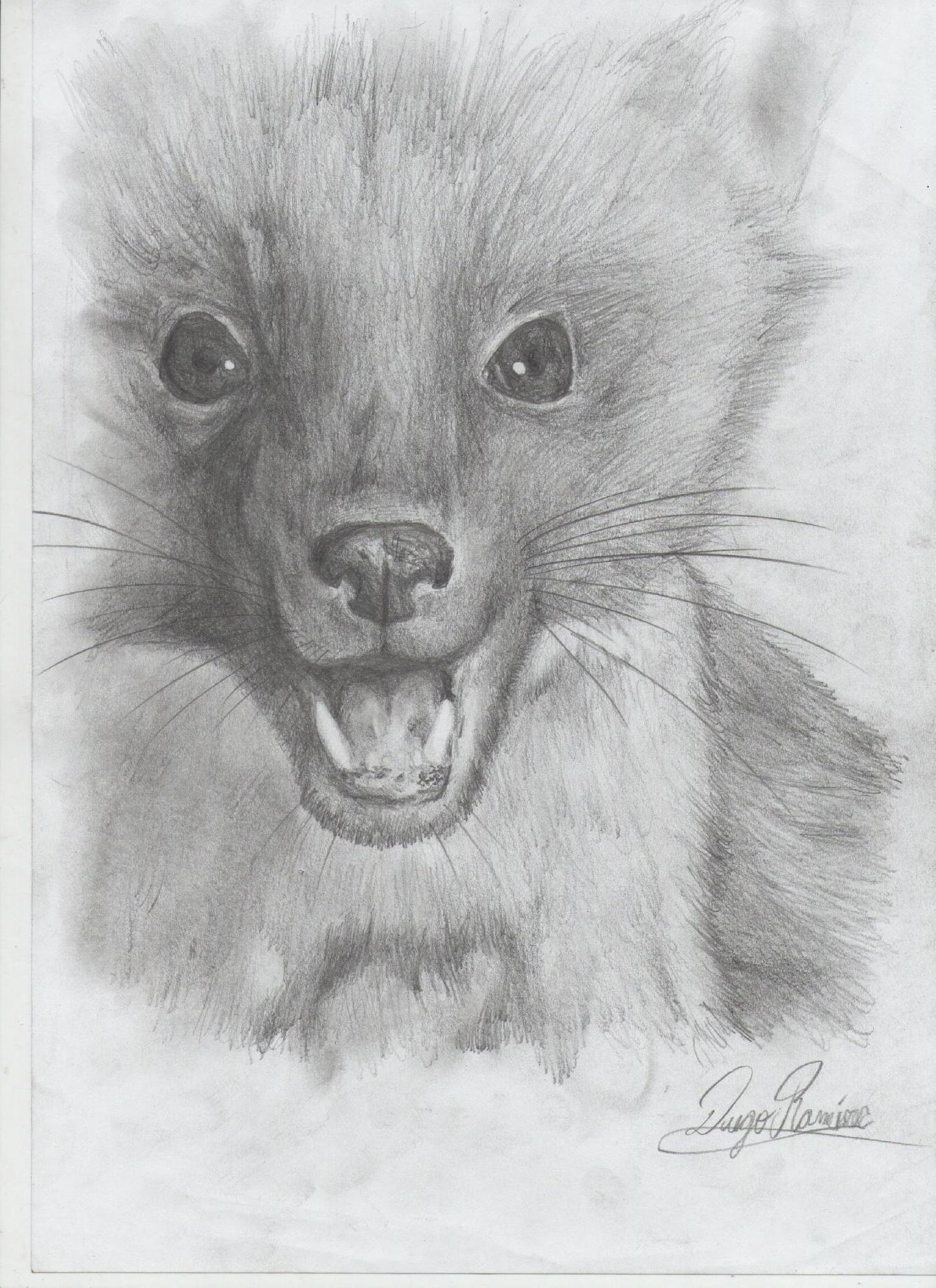 Imagen relacionada  dibujos  Pinterest  Ilustraciones y Dibujo