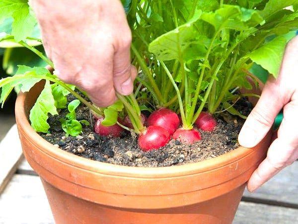 Les 13 Légumes Les Plus Faciles (et Rapides) à Faire POUSSER EN POT.