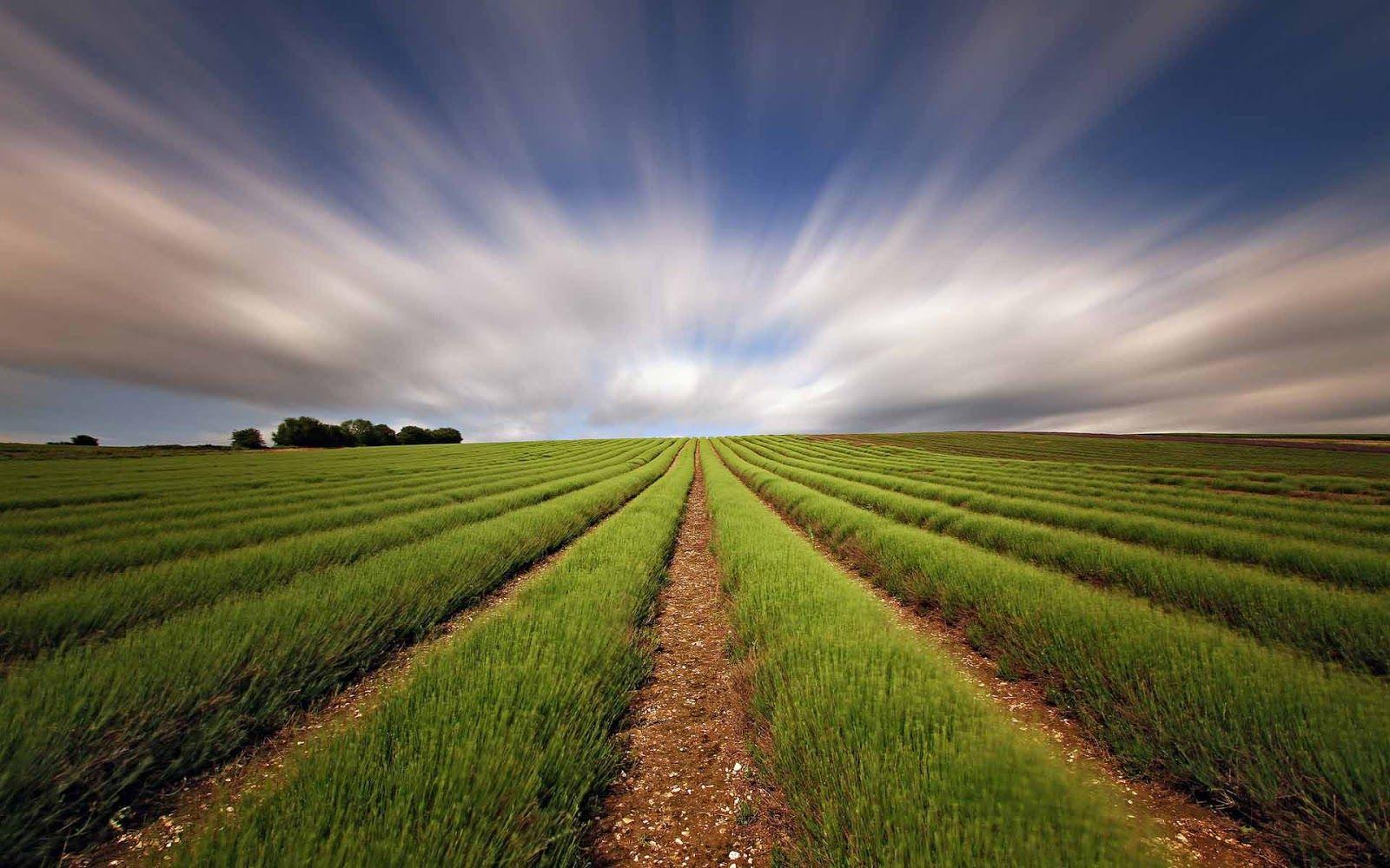 Straight Field Green Lines Wallpaper