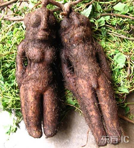 Funny Looking Plants Google Search Unusual Plants Weird Plants