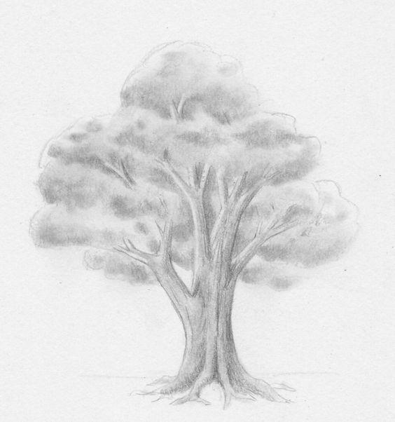 Zeichnen lernen - Baum Laubbaum Blätter Stamm Blattwerk - Tutorial ...