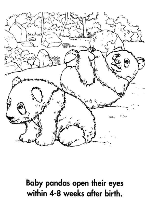 Click SHARE THIS STORY ON FACEBOOK | Bear coloring pages ...