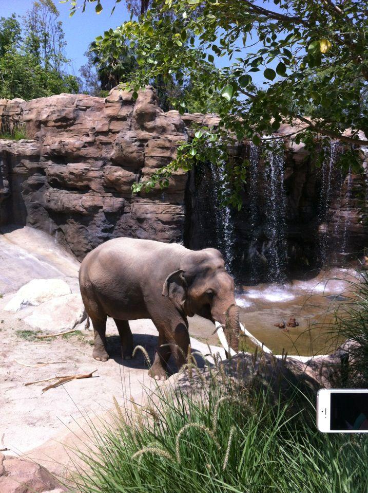 Los Angeles Zoo Los Angeles Zoo Los Angeles Vacation Zoo