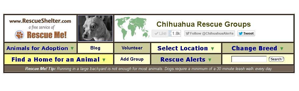 Chihuahua Dog Rescue Group Directory De La Faune Chihuahua