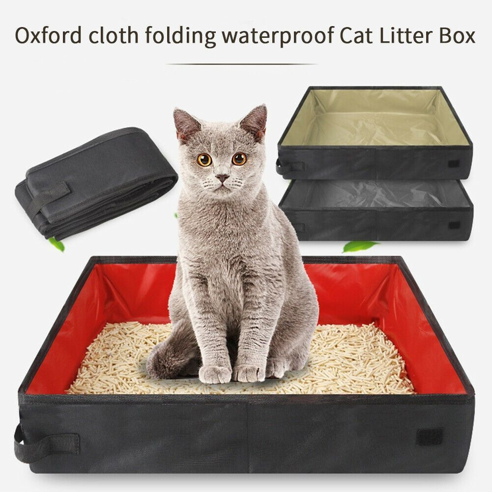 Good Photo cat litter outdoor Popular There are lots of