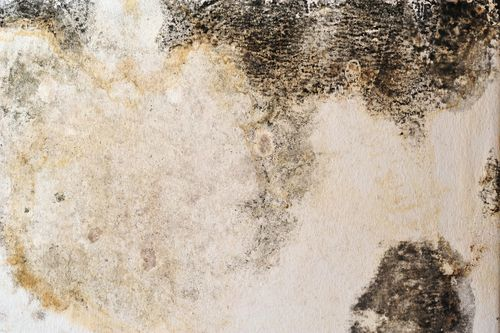 Aztec wants to help you be rid of #mould #myths once and for all - our new blog shares the #facts. http://goo.gl/n5LDZg