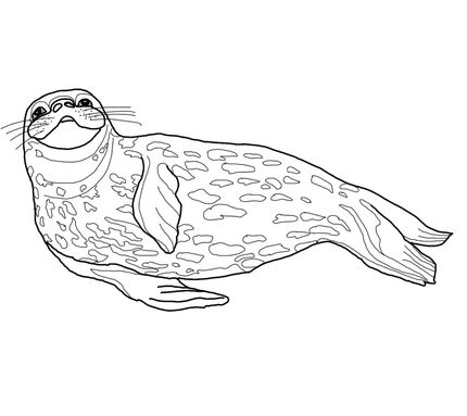 Weddell Seal Coloring Page South Pole Sea Animals Drawings
